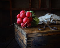 Bundle of radishes on a wooden box, scissors on a dark background Royalty Free Stock Image