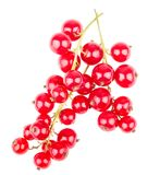 Bundle of red currant stock photography