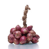 Bundle of  red onion Royalty Free Stock Photo