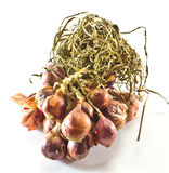 Bundle of red onion Royalty Free Stock Image