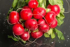 Bundle of red radishes on display, full. Bundle of red radishes on display, studio-shot , full Royalty Free Stock Images