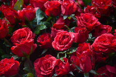 Bundle of red. Roses sold in a flower shop Royalty Free Stock Photos