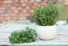 Bundle of savory, in a vase Stock Photography