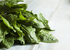 Bundle of spinach Stock Photography