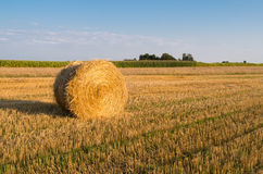 Bundle of straw. Harvest in Poland Stock Image