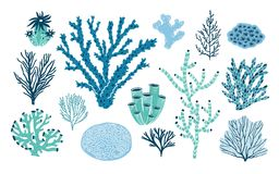Bundle of various corals and seaweed or algae isolated on white background. Set of blue and green underwater species. Marine creatures, sea or ocean flora and vector illustration