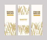 Bundle of vertical banner templates with wheat ears on white background. Baked products, bread, bakery, bakeshop or. Bakehouse advertisement. Realistic vector vector illustration