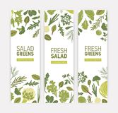 Bundle of vertical web banner templates with green vegetables, fresh salad leaves and spice herbs on white background vector illustration