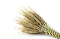 Bundle of wheat Stock Photos