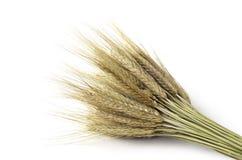 Bundle of wheat. Isolated on white Stock Photos