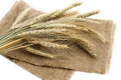 Bundle of wheat ears. Isolated on cereal background Royalty Free Stock Photo