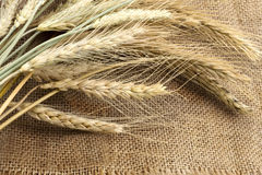 Bundle of the wheat ears on sack royalty free stock image