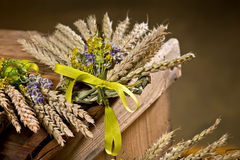 Bundle of wheat. With flower and band Royalty Free Stock Images