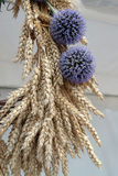 Bundle of wheat with flower. Harvest in Nedelisce, Croatia Royalty Free Stock Photography
