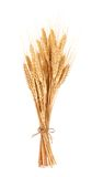 Bundle of wheat isolated on a white background Royalty Free Stock Photo