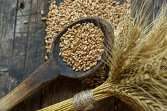 Bundle of wheat and wheat beans. In a wooden spoon on a old background Stock Photography