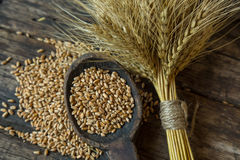 Bundle of wheat and wheat beans. In a wooden spoon on a old background Royalty Free Stock Photos