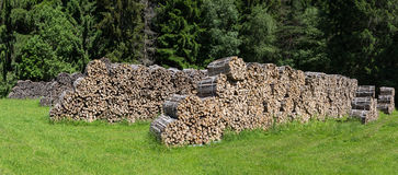 Bundled firewood on a glade. Bundled firewood in several rows on a glade in the forest royalty free stock photo