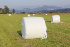 Bundled Hay Bale. Wrapped Hay Bale in an open field royalty free stock images