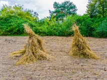 Bundled hay stacks on the field in a nature landscape. Scene stock photos