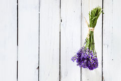 Bundled Lavender Flowers Drying At Rustic White Wall Stock Photography