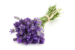 Bundled Lavender Flowers Isolated On White Background Royalty Free Stock Photo