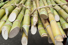 Bundles of bamboos Stock Photo