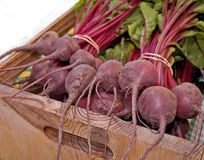 Bundles of Beets in Box. Bundles of beets are still with their tops and wrapped in bunches with rubber bands and placed in a wooden box Royalty Free Stock Image