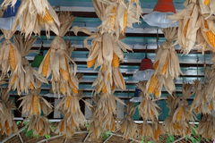 Bundles of corn is hanged under the roof of house Royalty Free Stock Photography