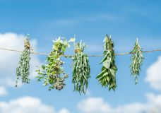 Bundles of flavoured herbs drying on the open air. Sky background. royalty free stock photography