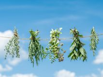 Bundles of flavoured herbs drying on the open air. Sky background. royalty free stock image