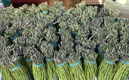 Bundles of Fresh Asparagus royalty free stock photo