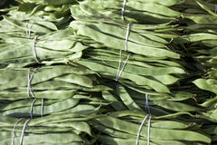 Bundles of fresh green beans . Green beans, Hanging haricot bean, Phaseolus vulgaris pods alone. Cluster beans Royalty Free Stock Photo