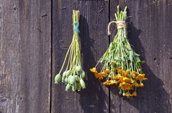 Bundles of fresh herbs hanged to dry  on a wooden wall Royalty Free Stock Photo
