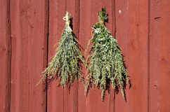 Bundles of fresh herbs hanged to dry  on wooden wall Stock Photo
