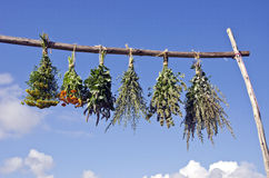 Bundles of fresh medical herbs hanged to dry on  wooden stick Stock Images