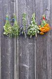 Bundles of fresh medical tied herbs hanging on the wooden wall Stock Photos