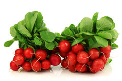 Bundles of fresh radishes. Two bundles of fresh radishes on a white background Royalty Free Stock Photos
