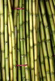 Bundles of Fresh Sugar Cane Royalty Free Stock Photos