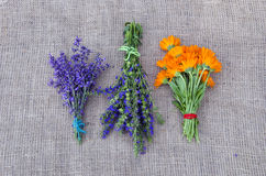 Bundles of freshly picked herbs placed on linen background royalty free stock photo