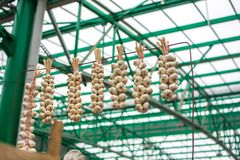 Bundles of garlic. At the local market Stock Images
