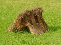 Bundles of grain. Grain sheaves in the fields of a farm in summer Royalty Free Stock Images