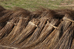 Bundles harvested reed are drying. Bundles of harvested reed are drying on a meadow. Thatched roof are made with this reed Stock Photos
