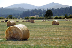 Bundles of hay. In a big grass field with trees and mountain in the background Royalty Free Stock Photo