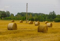 Bundles of hay rolls on the farmland, twisted hay in the field stock photos