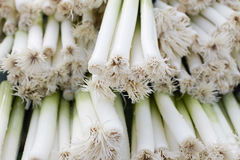 Bundles of leeks Stock Photos