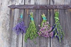 Bundles of medical herbs hanging on the door. Bundles of fresh medical tied herbs hanging on the wooden antique door stock images