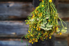 Bundles of medicinal plants St. John's wort is collected for drying hanging. In the background of the old wooden barn. Hypericum flowers. Procurement of Royalty Free Stock Photo