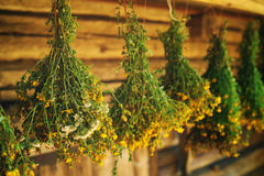 Bundles of medicinal plants St. John's wort is collected for drying hanging Royalty Free Stock Images