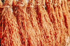 Bundles of newly harvested rice drying in the sun. A Bundles of newly harvested rice drying in the sun royalty free stock photos
